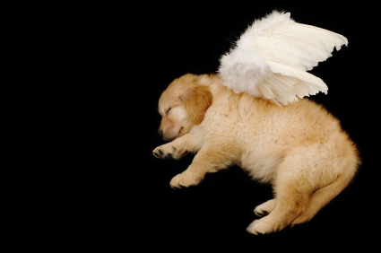 Tiny angels of the furry kind
