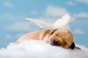 Puppy Angel, Furry Angel