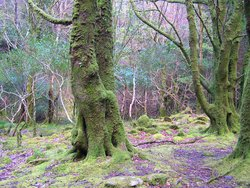 A fairy forest