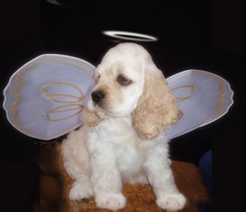 Lil Dog Angel